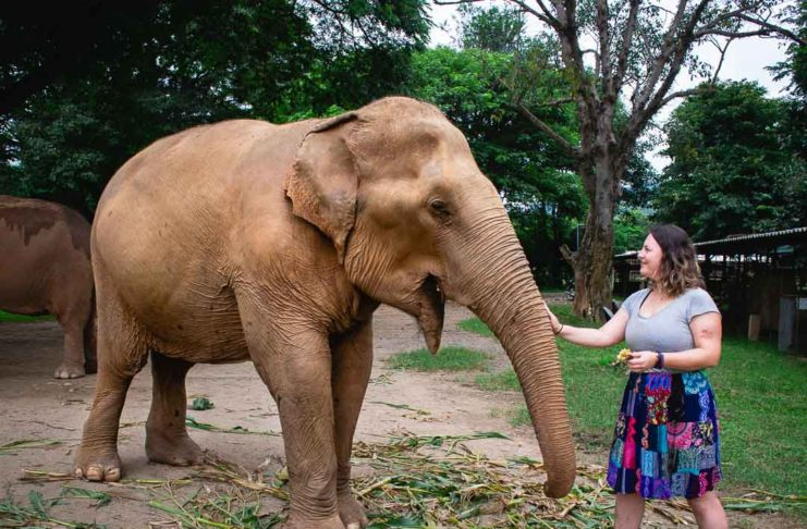 Volunteering at the Elephant Nature Park, Chiang Mai Thailand