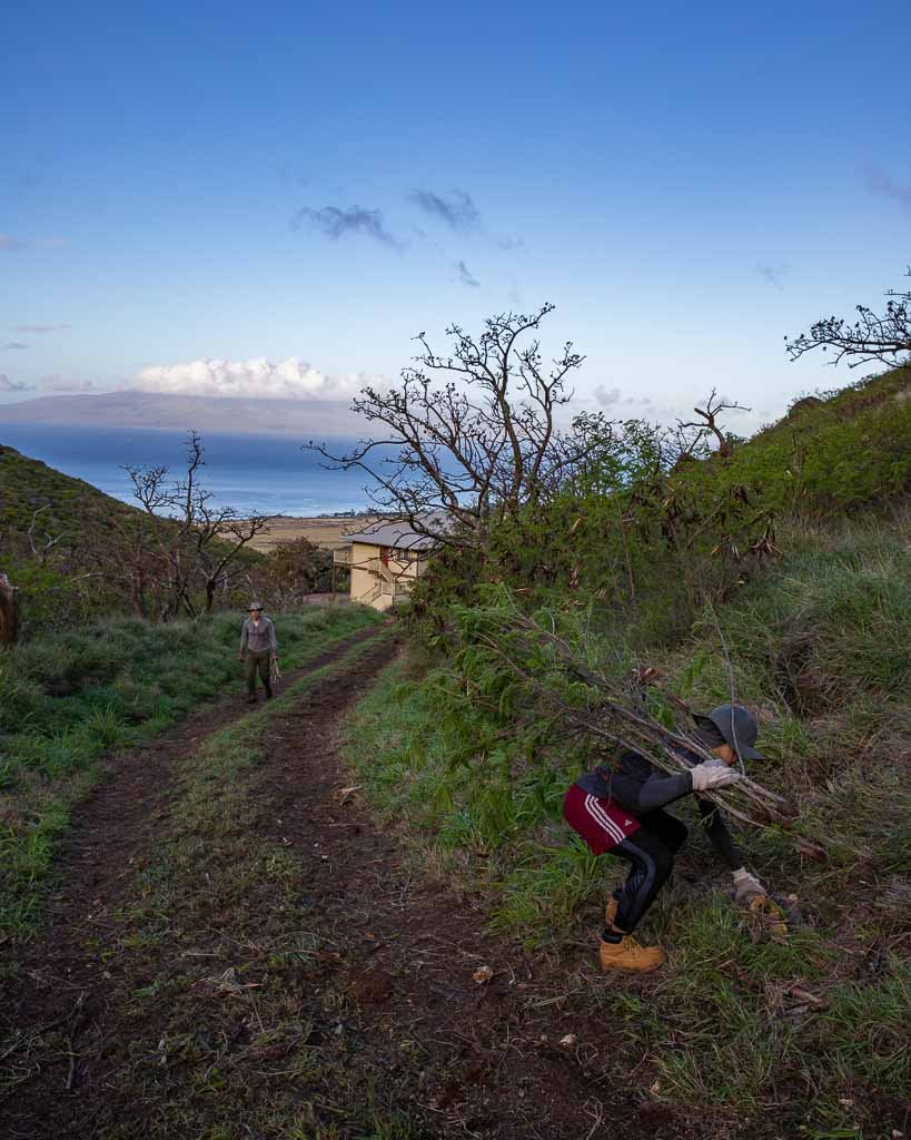 Working on a WWOOF farm on Maui, Hawaii