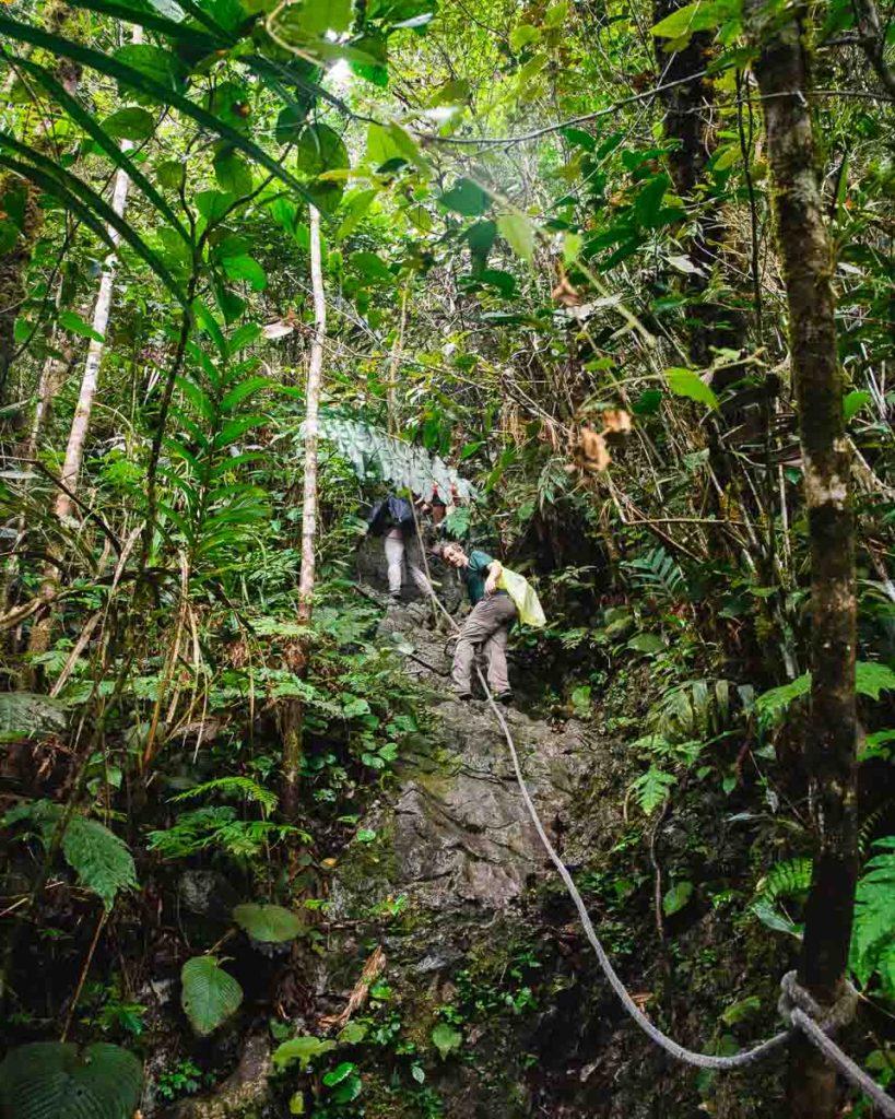 Pinnacles Trek, Gunung Mulu National Park
