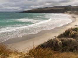 Best Things to do on the Otago Peninsula: Sandfly Bay